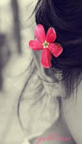 صورة الملف الشخصي لـ gold rose
