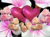 الحب الوردى